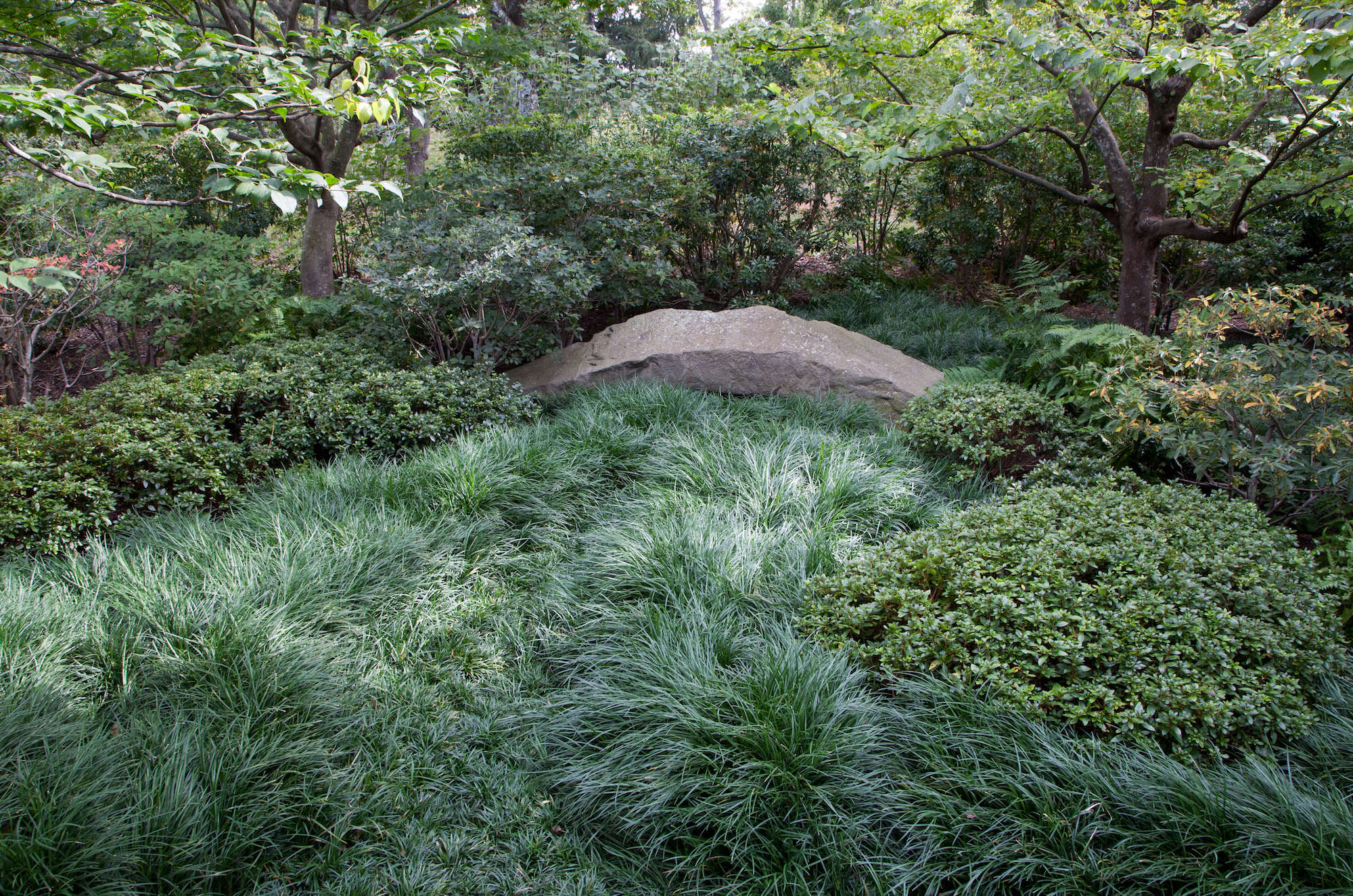 Mondo Grass Patch In Japanese Inspired Garden Irvington  Part 52