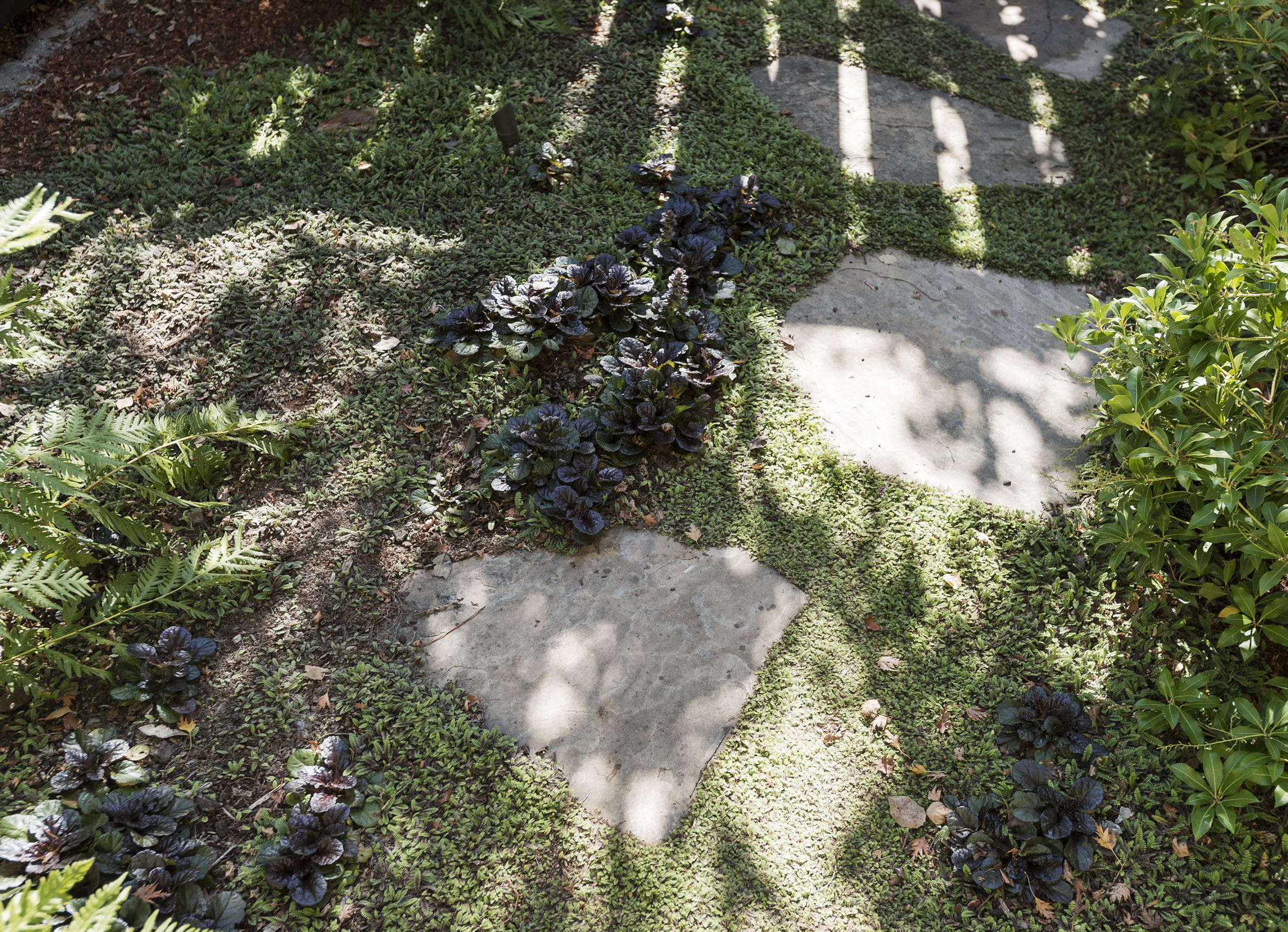 How to plant ground cover between pavers - Plants Between Pavers Dollhouse Fern Matthew Williams