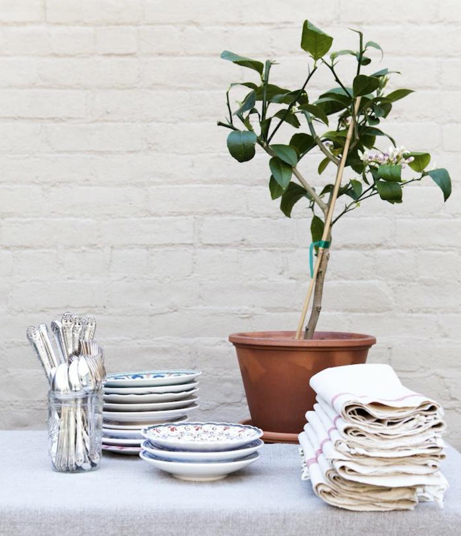 Unthinkable House Plant Tree. Gardening 101  Lemon Tree Gardenista Sourcebook for Outdoor