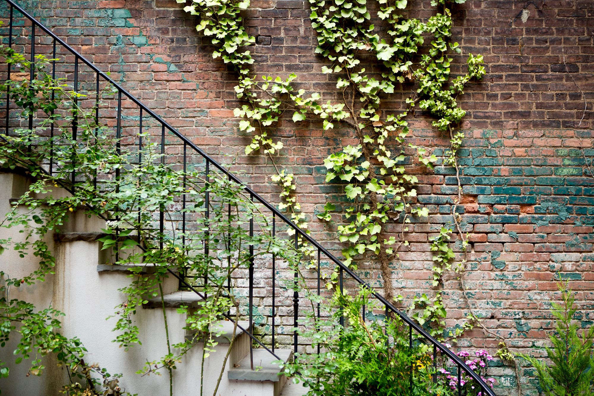 vines climbers a field guide to planting care design. Black Bedroom Furniture Sets. Home Design Ideas