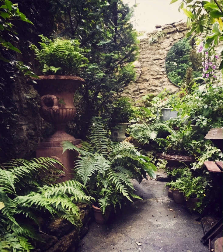 Ask the expert design tips for a shady courtyard garden for Shady courtyard garden design