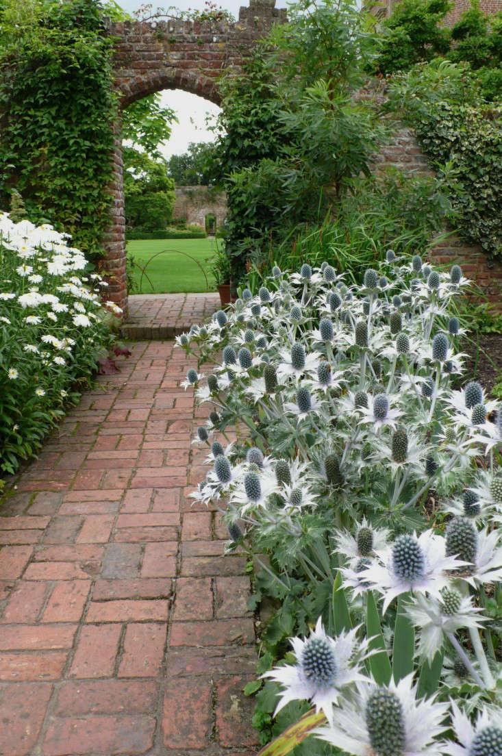 Gardening 101 sea holly gardenista for Garden design 101