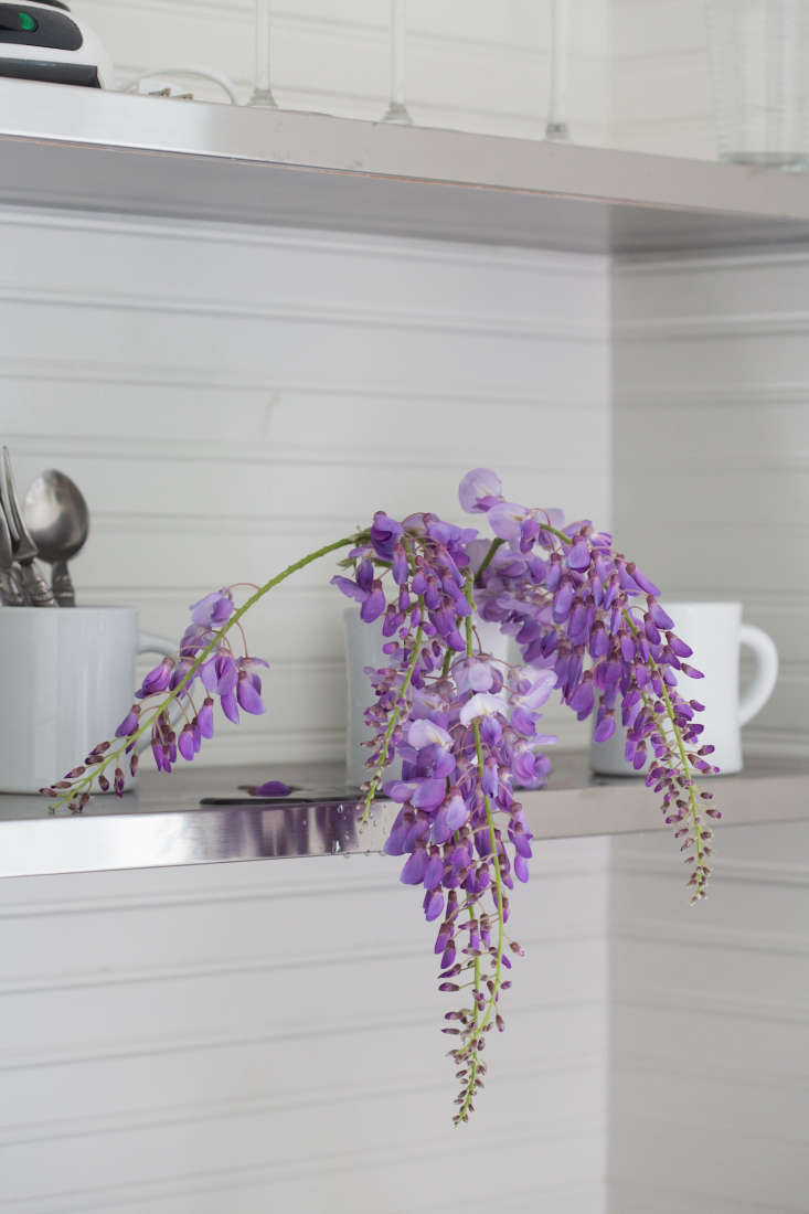 Foraged wisteria from Michelle&#8\2\17;s next-door neighbor&#8\2\17;s vines. Photograph by Mimi Giboin for Gardenista.