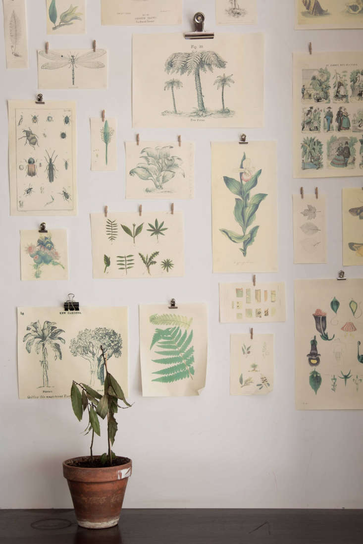 GreenHouse Paris Botanical Prints, Photo by Alison Engstrom