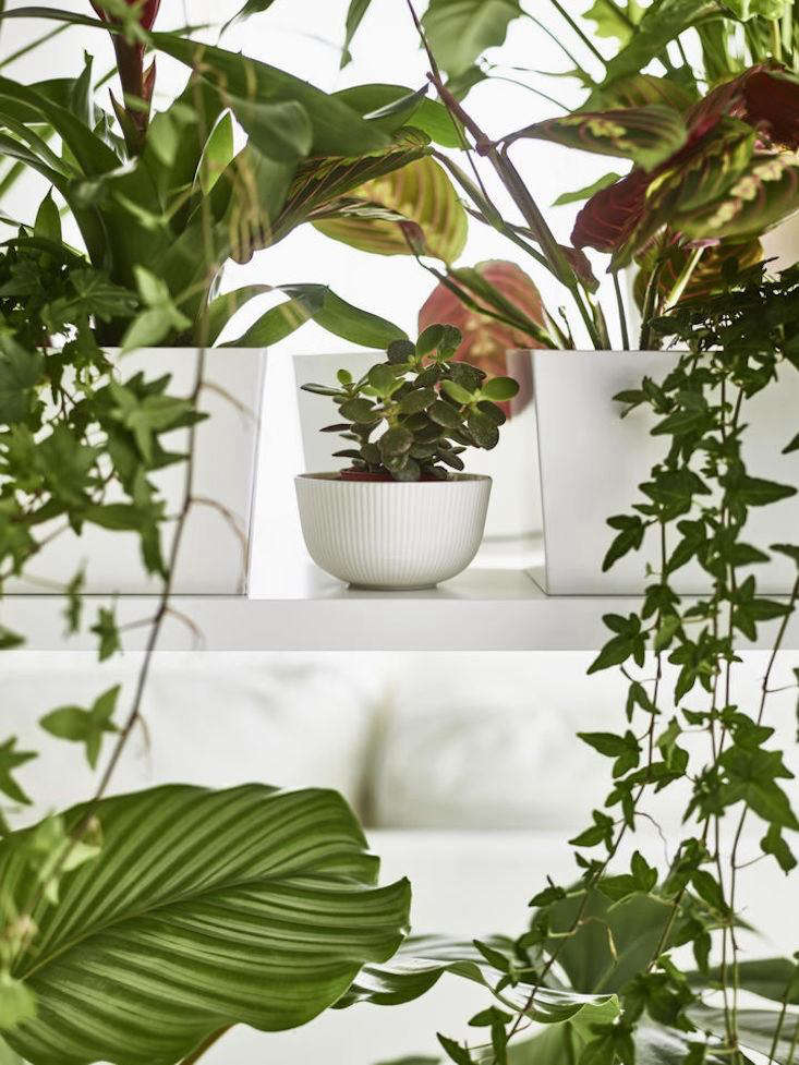 An Insideru0027s Guide To Getting First Dibs On The Best Ikea Houseplants |  Gardenista: Sourcebook For Outdoor Living | Bloglovinu0027