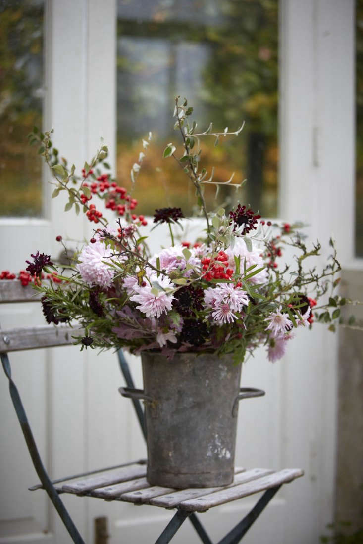 An early winter arrangement with red berries of cotoneaster, handfuls of rosemary, and dark scabious 'Black Knight'.