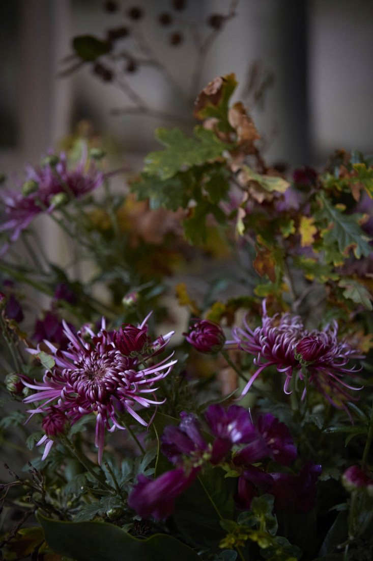 Spider chrysanthemum 'Saratox Lilac' is offset with leaves of oak, these ones Turkish oak, with a finer leaf and a more eastern look than that of English oak.