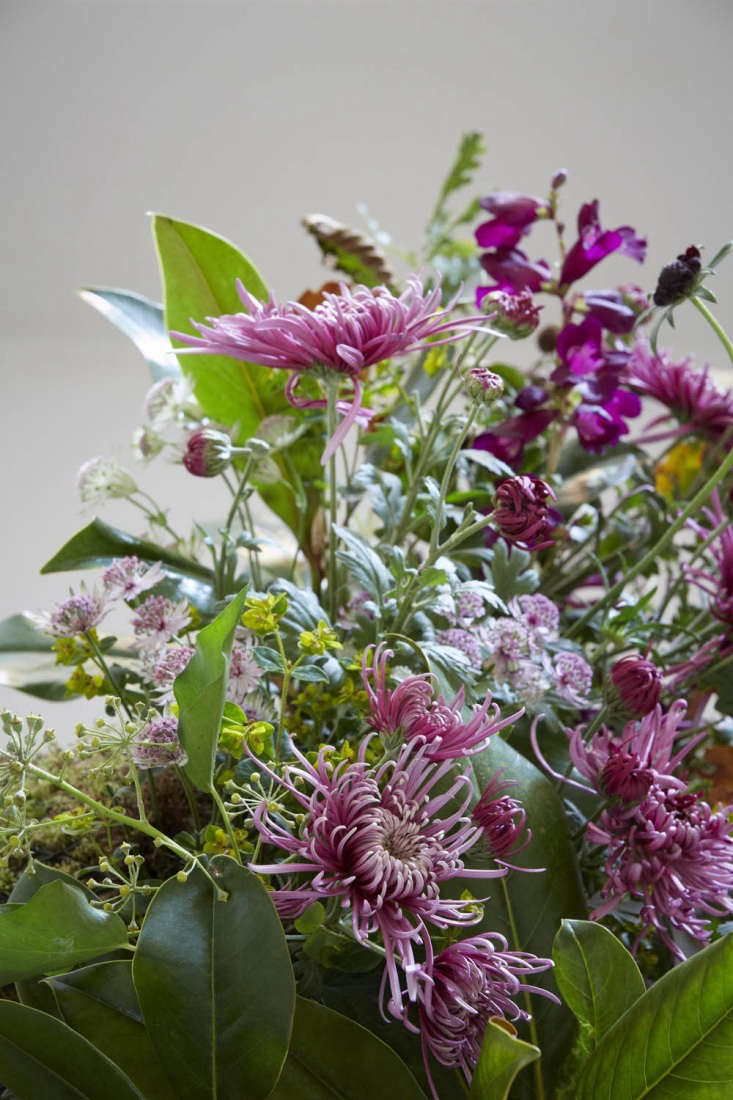 A late autumn bunch that includes Chrysanthemum 'Saratov Lilac', bay, ivy and astrantia.