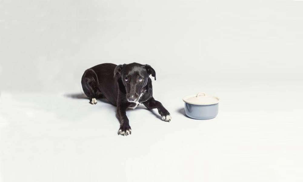 enamel dog food bowl with lid cloud7 cover