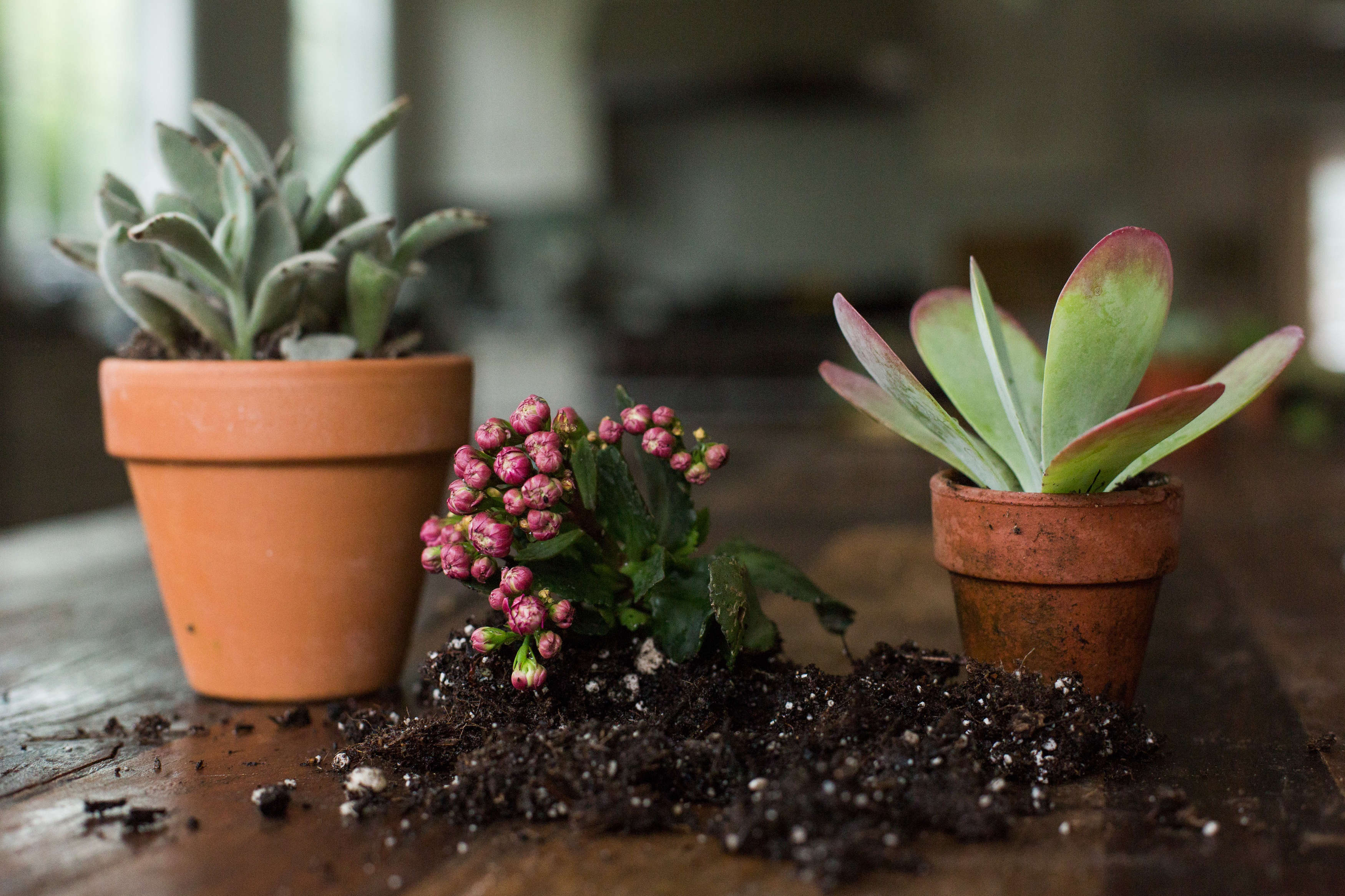 Succulents Explained How To Identify And Grow 12 Favorites Gardenista