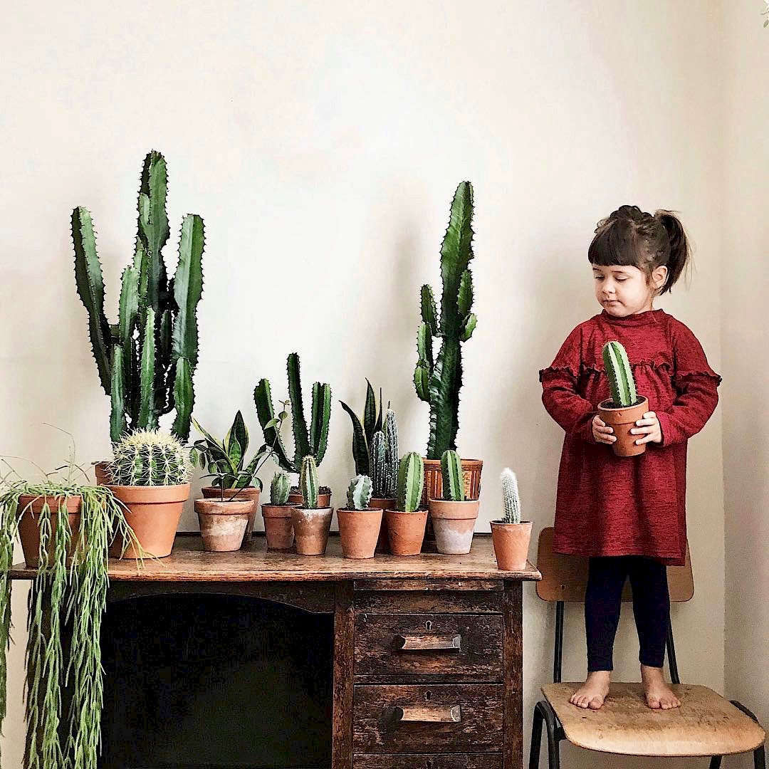 stylist design house plant seeds.  10 Houseplant Lovers to Follow on Instagram Gardenista