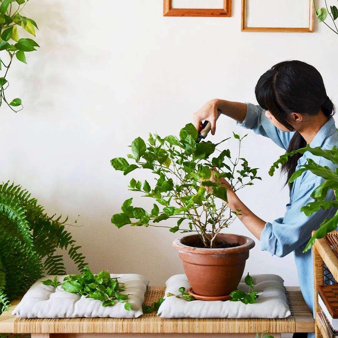 stylist design house plant seeds.  houseplant 10 Best Hashtags to Explore on Instagram Gardenista