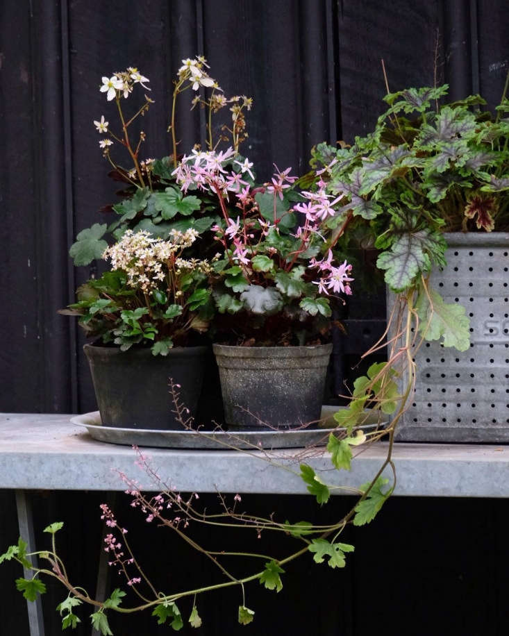 10 Things to Do in the Garden in June