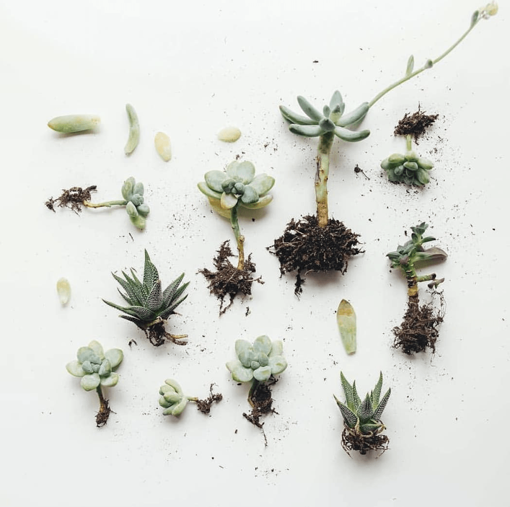 Houseplants 101: How to Propagate Plants - Gardenista