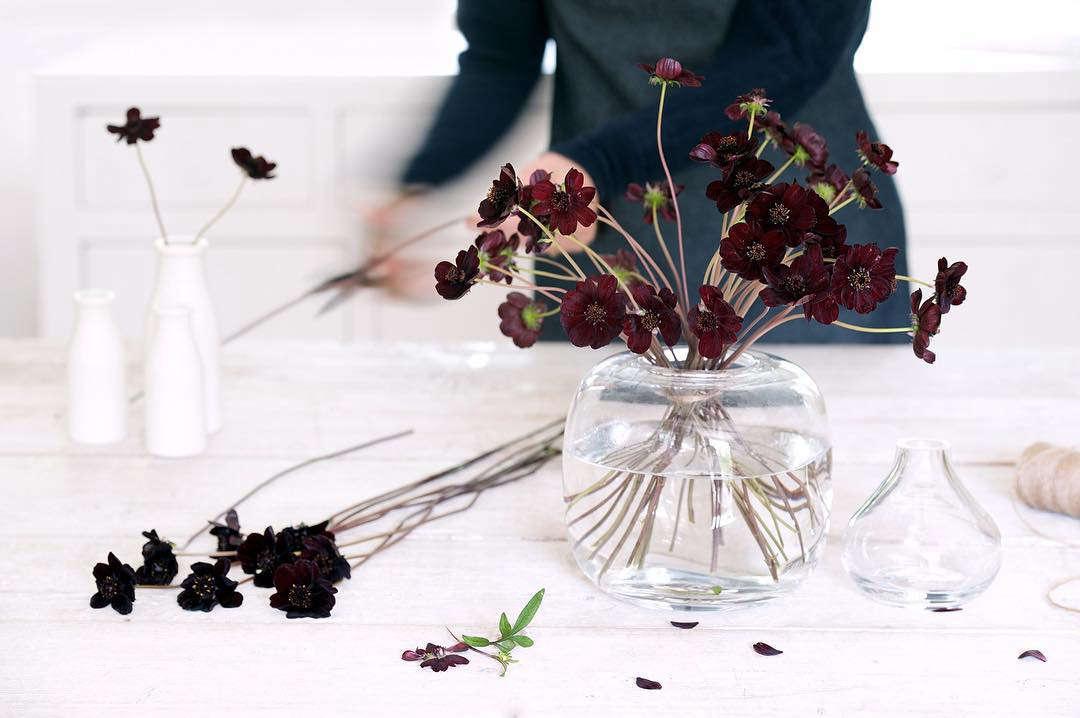 cosmos florist philippa craddock