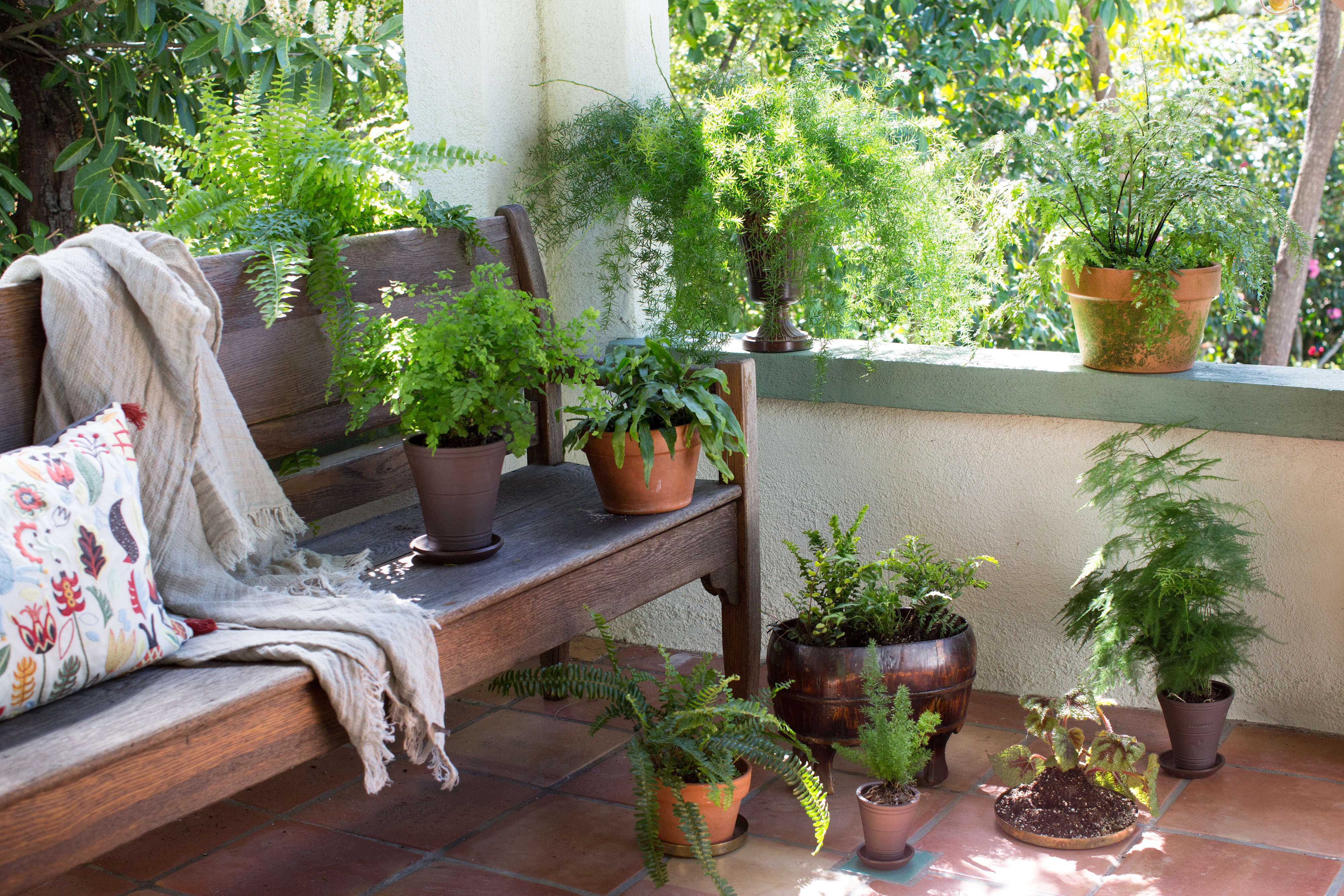 The Houseplant Diaries How I Learned To Stop Worrying And Love Finicky Ferns Gardenista
