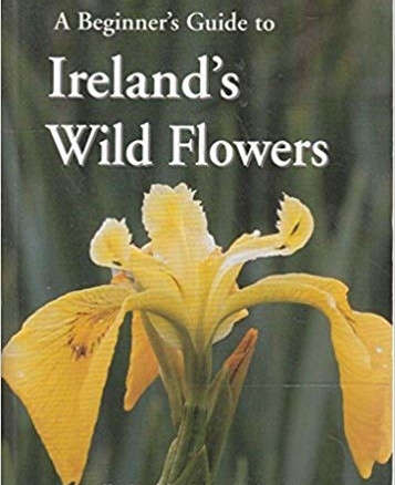 A Beginner's Guide to Ireland's Wild Flowers
