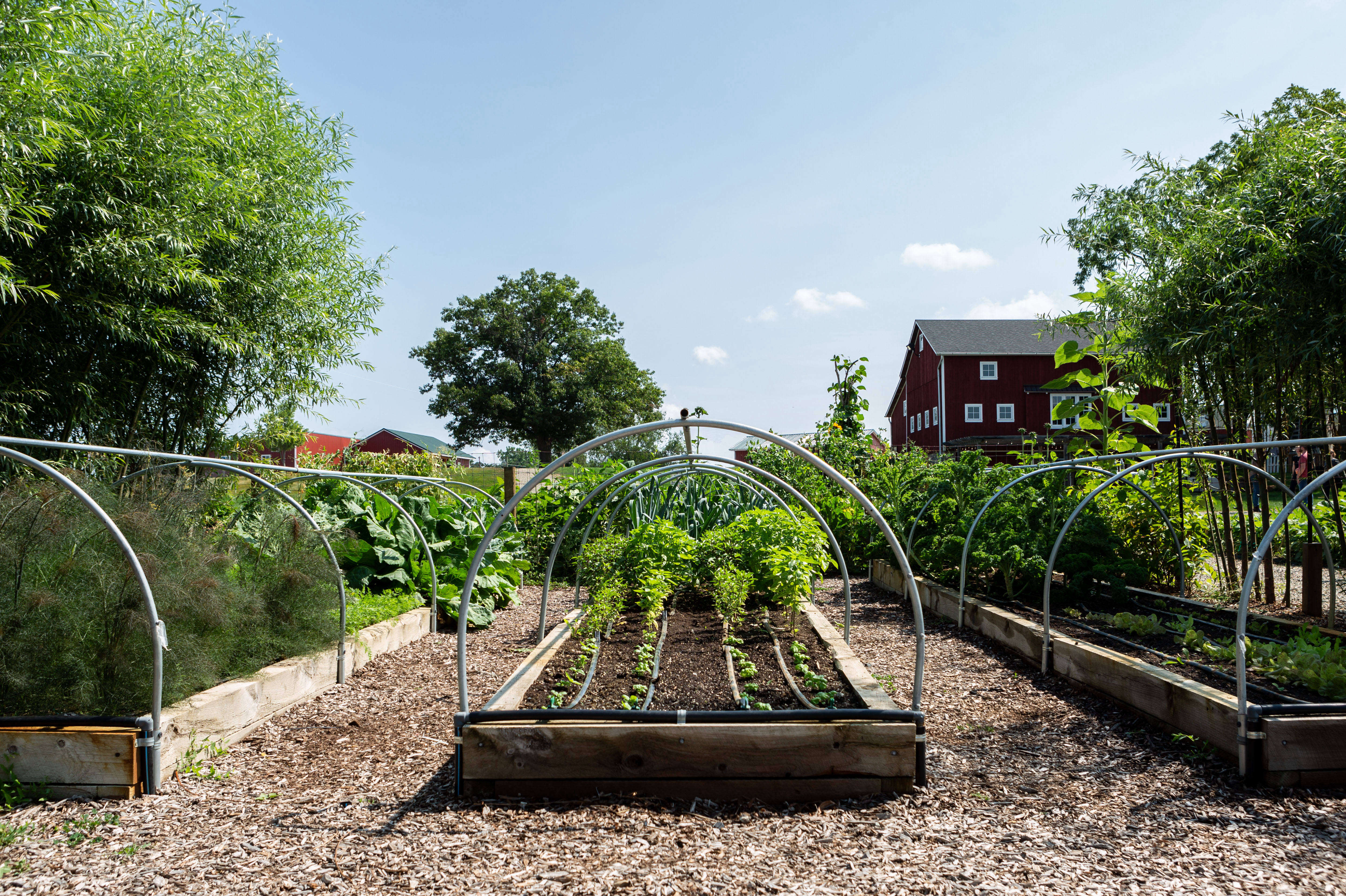 10 Edible Garden Ideas To Steal From Michigan S Favorite Foodie Farmers Gardenista