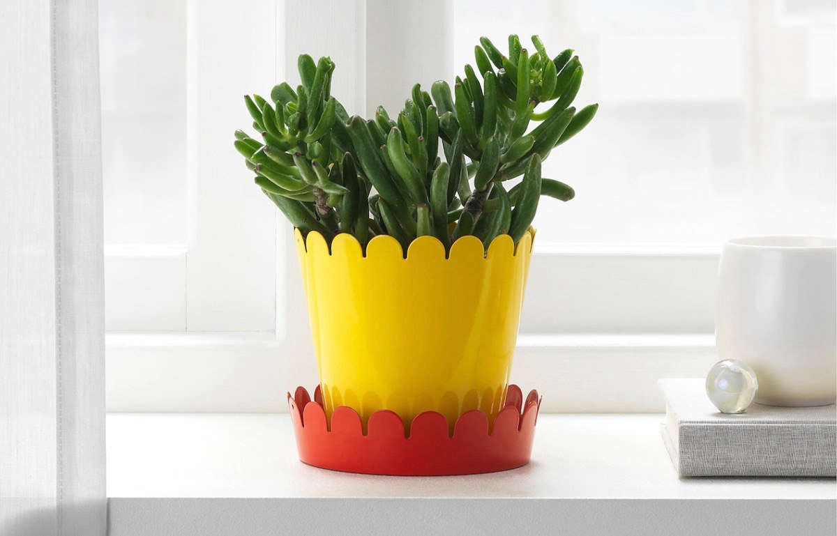 A New Ikea Plant Saucer That Will Change Your Life For 99 Cents Gardenista