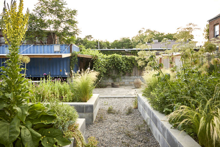 Instead of patchy grass, gravel now fills in the space between the beds. Standing tall in the left bed is Verbascum 'Christo&#8\2\17;s Yellow Lightning'. The blue shipping container is accessed from the parking lot and acts as Lindsey&#8\2\17;s gardening toolshed.
