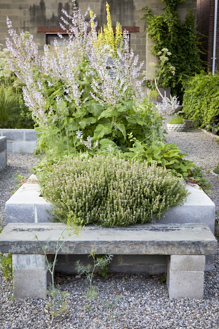 A profusion of thyme in the foreground. Photograph by Dana Gallagher, from Garden Visit: Mindful Neglect in Lindsey Taylor&#8\2\17;s Rambunctious Cinderblock Garden.