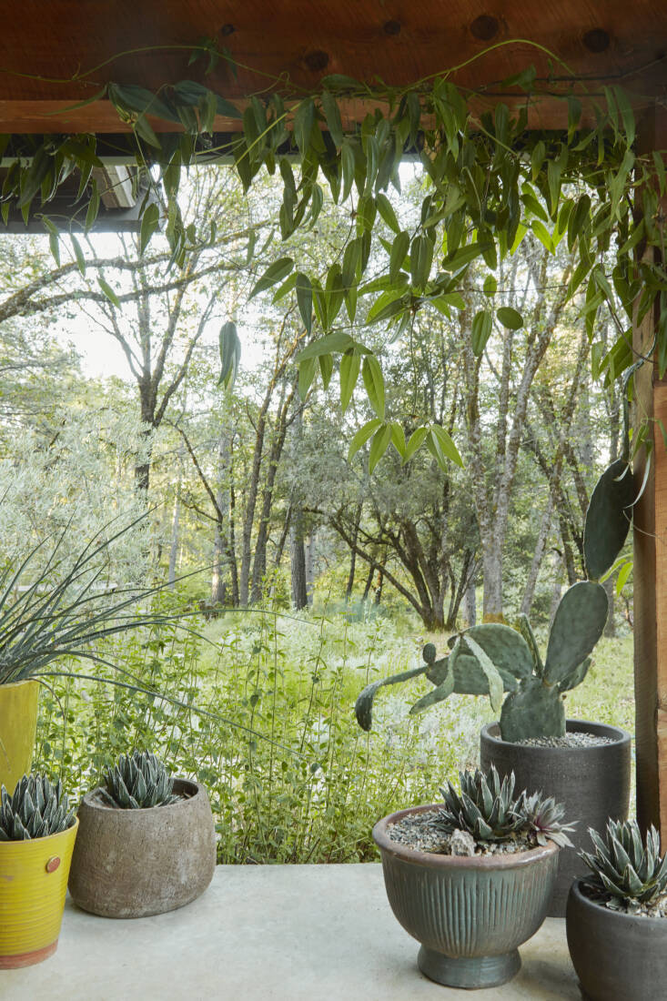 Caitlin decora su porche con macetas compradas en Flora Grubb Gardens en San Francisco.  Agave  2  16; puercoespín  2  17;  llena la mayoría de ellos, mientras que una enredadera Clematis armandii enmarca su vista del bosque.