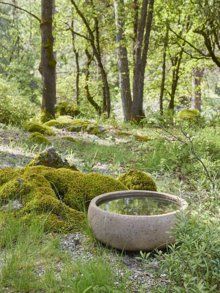 Este sencillo baño de hormigón para pájaros atrae principalmente a pájaros carpinteros de bellota.  Caitlin agrega:  2  20; Por supuesto, hay petirrojos, pinzones de temporada y colibríes en el jardín, pero no tanto en el agua.   2  2  1;
