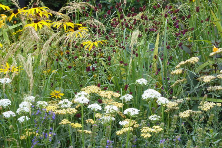 Grasses were always destined to be the star of a September flower show, and they appear in various guises in almost every garden. In the bijoux Parsley Box garden designed by Alan Williams, the sun-bleached grasses provide a counterfoil to the jewel-toned perennials including sanguisorba, achillea, and rudbeckia.