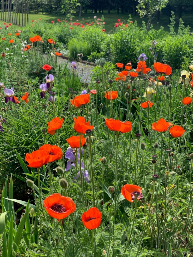 Poppies for the picking.